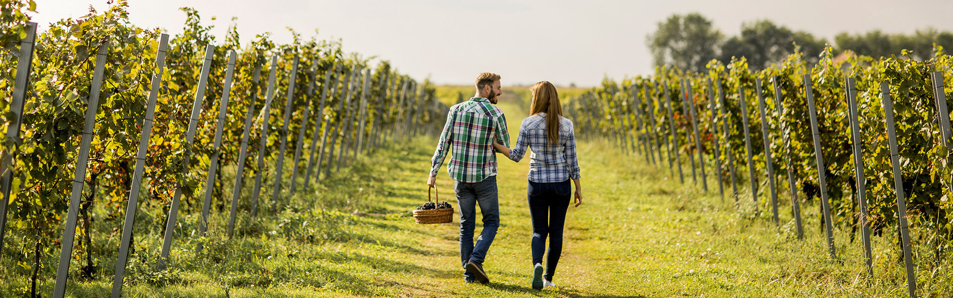 vineyard and winery insurance new baden il
